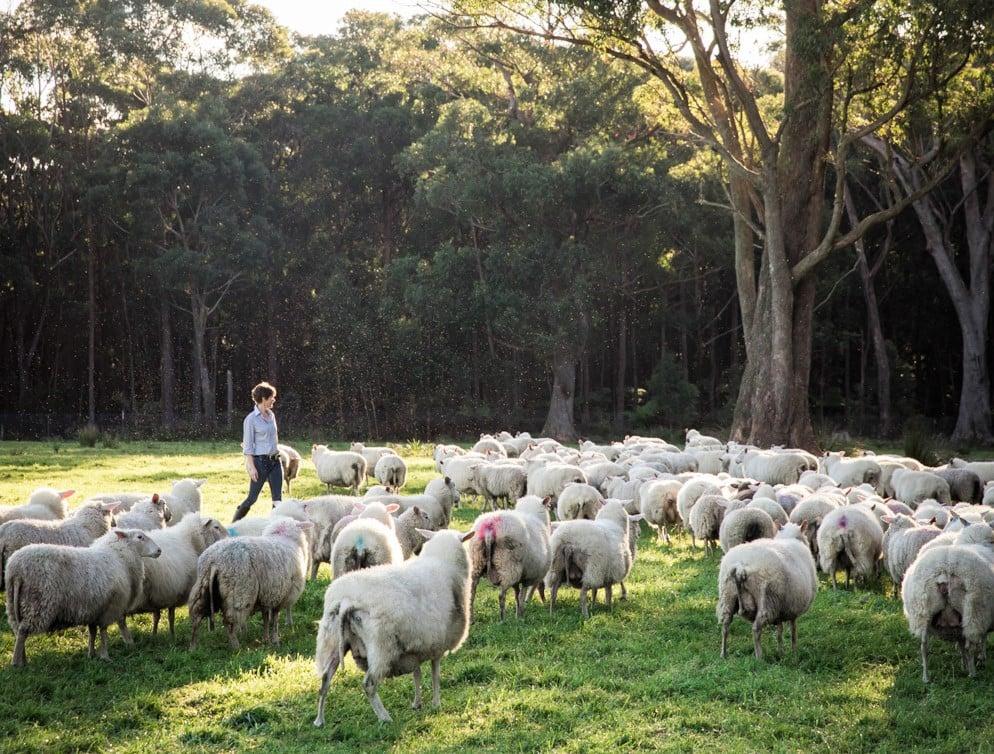 Artisan Sheep Milk Dairy 4