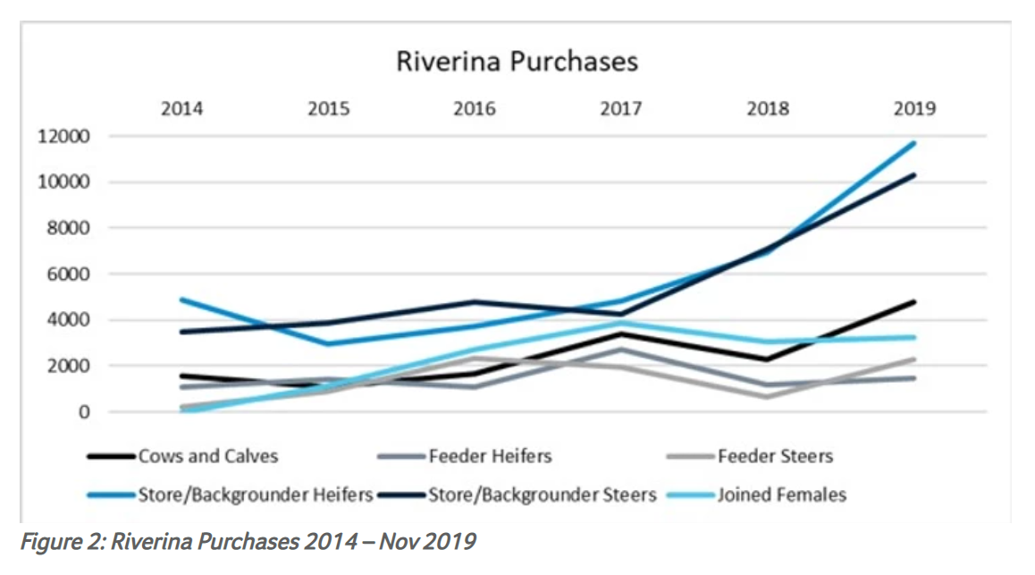 Does the future of Australia's cattle herd hinge on Victoria and the Riverina 2