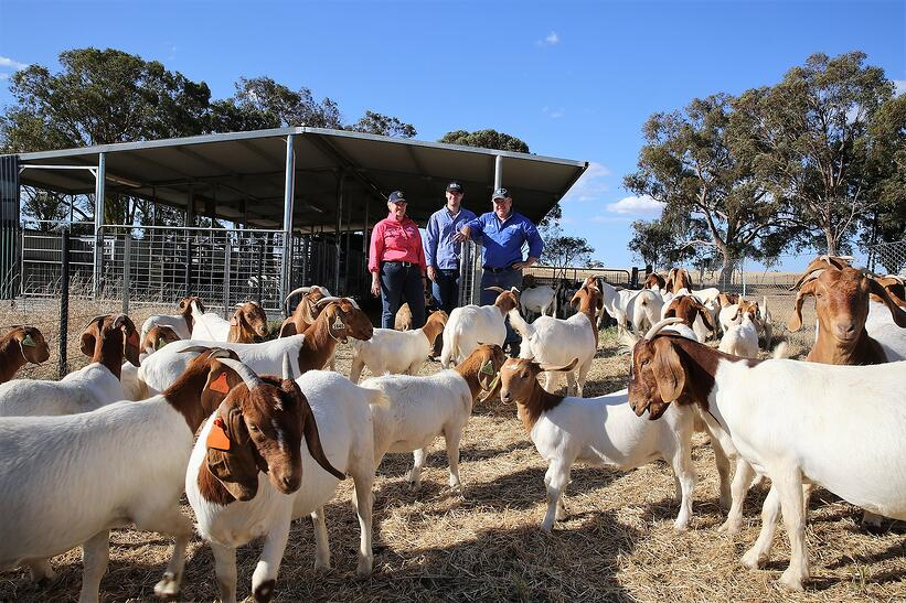 Linda McKenzie goat article.JPG 1-1