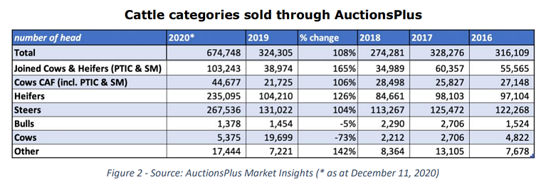 cattle sold through auctionsplus. 2PNG