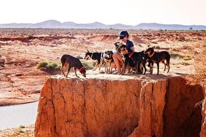 pilbara working dogs