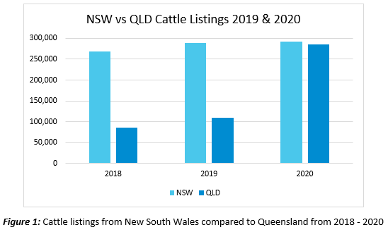 rise of queensland cattle 1