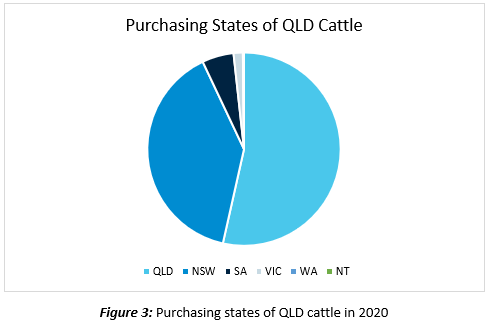 rise of queensland cattle 3