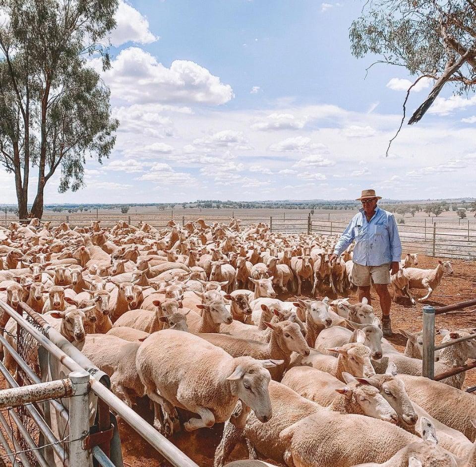 rural livestock 1