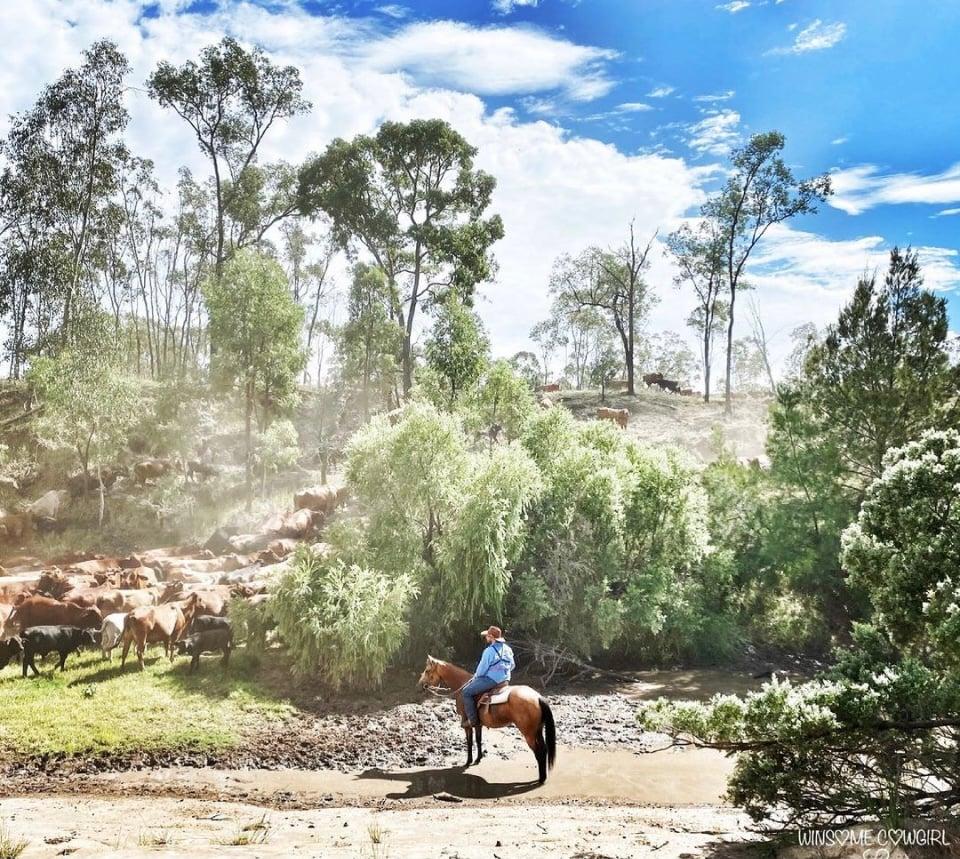 rural livestock 2