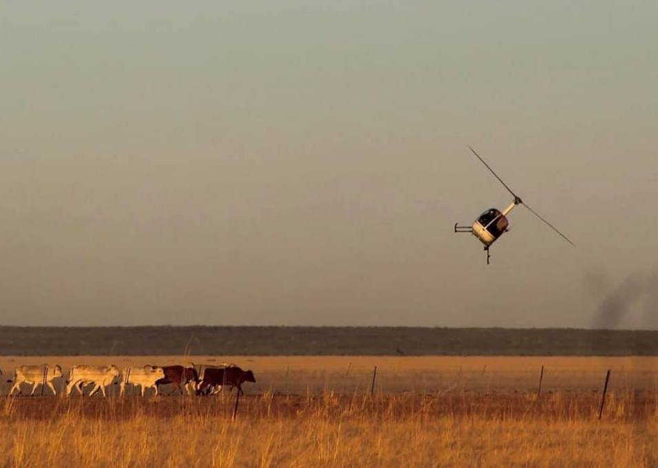 rural livestock 3
